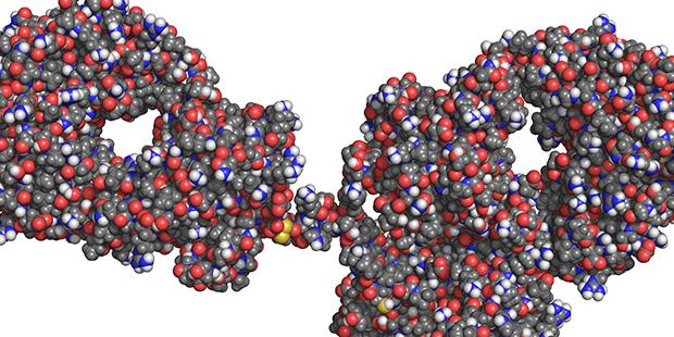 Anti-HIV antibody