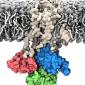 Membrane bound structure of the Sarcoplasmic reticulum calcium pump
