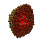A gas phase oxidation leading to formation of hollow oxide iron nanoparticle.